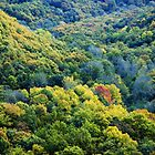 Rouvre Gorge - Autumn Trees by WebVivant