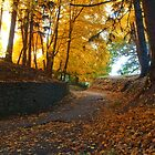 Autumn trail by Jeff Palm Photography
