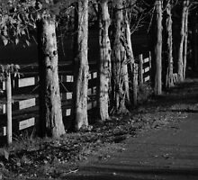Black and white fence by Carol Knepp