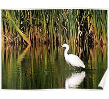 Snowy Egret in Marsh 2 Poster
