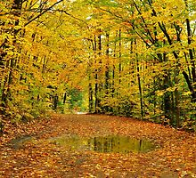 Golden Canopy by Nancy Barrett