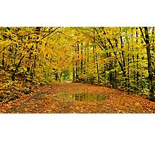 Golden Canopy Photographic Print