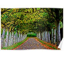tree-lined walk Poster