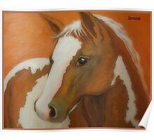A horse portrait Poster