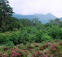 Ariundle Woodland by WatscapePhoto