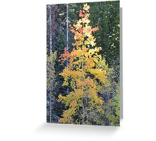 Young Aspen Greeting Card