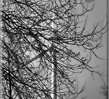 Branching out. by Rudywalsh