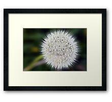 Dandelion Glow Framed Print