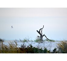 Beach | Fire Island, New York Photographic Print
