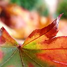 Colors of Change III by myREVolution