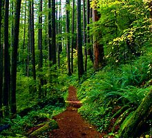 Kentucky Falls Trail #2 by Allan  Erickson