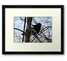 Blackbird in a Tree Framed Print