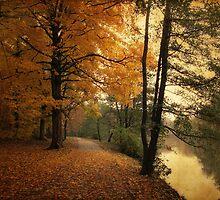 A Leafy Path by Jessica Jenney