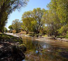 San Pedro River by David F Putnam