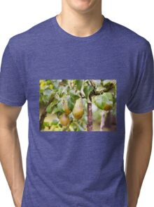 Pear tree ripe fruits cluster  Tri-blend T-Shirt