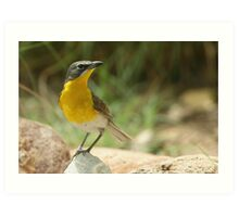 Warbler, Yellow-breasted Chat Art Print