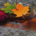 The season is autumn as told by the rock.... by Anthony  Romano
