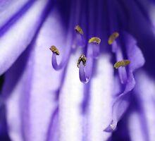 Life in purple - Finale by pnjmcc
