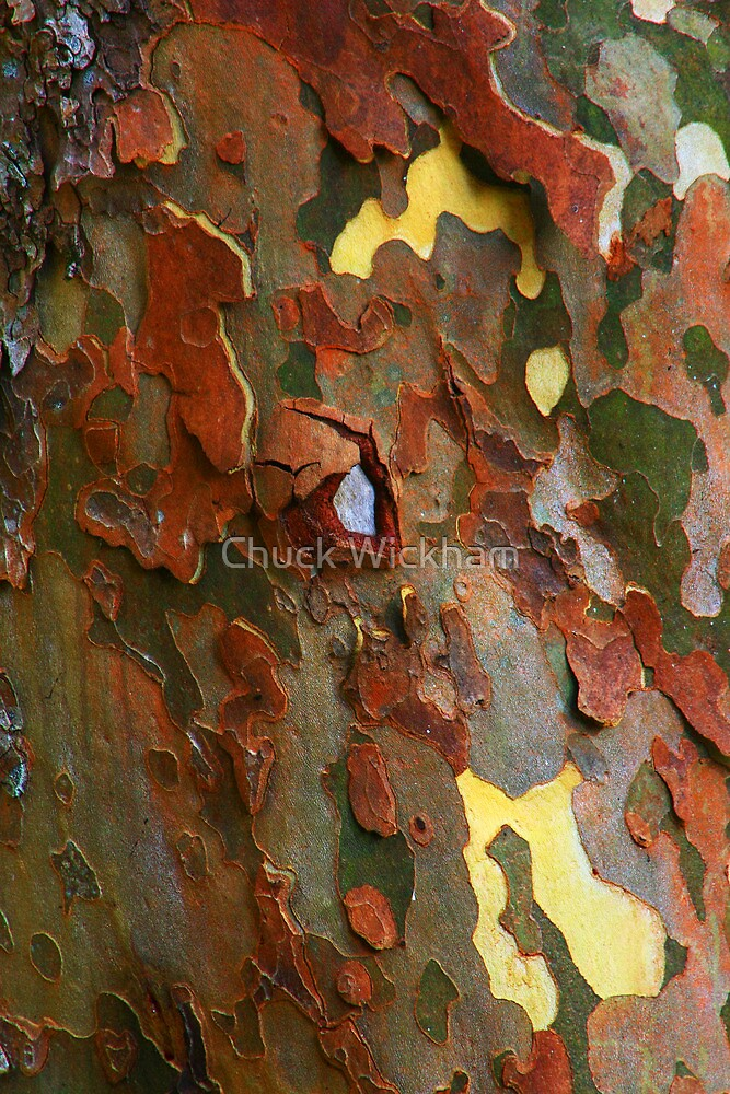 SYCAMORE BARK by Chuck Wickham