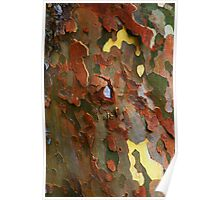 SYCAMORE BARK Poster