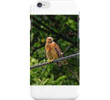 Hawk on The Wire iPhone Case/Skin