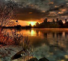 Pond Life. by James Ingham