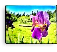 Flowers in the Meadow Canvas Print