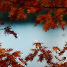 The Leaves of Autumn by Tori Snow