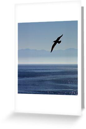 CANADA BIRD by BYRON