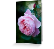 Rose Without Filters Greeting Card