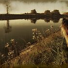 My life as a dog ... by PhotomasWorld