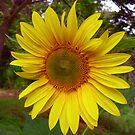 A little bit of Sunshine! by Gabrielle  Hope