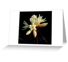 Spring Wildflower, Western Australia Greeting Card