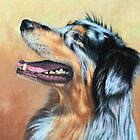 Australian Shepherd Dog by Nicole Zeug