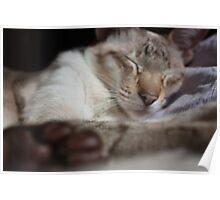 Daisy Sleeping Poster