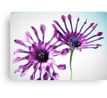 Whirligig daisies Canvas Print