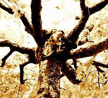 Amongst the trees Shoot by Nadia de Jong