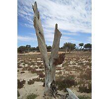 Victim of drought - Lake Mary, South Australia Photographic Print