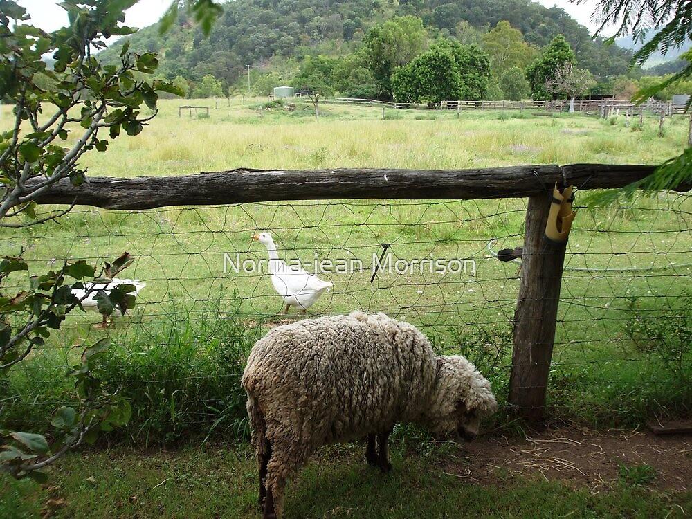 Gracie, friends, farm by Norma-jean Morrison