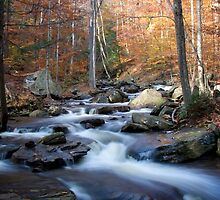 Streams of Life by Ann Rodriquez