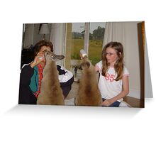 Baby Roos at dinner Greeting Card