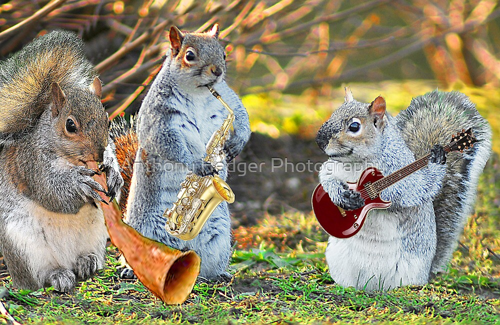 And the band played on by Anthony Hedger Photography