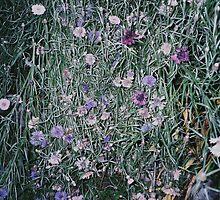 flower by tymzsy