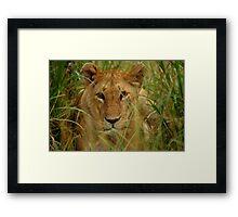 Lioness -Masai Mara Framed Print