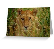 Lioness -Masai Mara Greeting Card