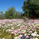 Everlasting Flowers by Mike Paget