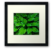 Green Foliage Framed Print