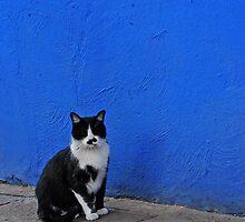 Khalo Cat by Lindsay Martin