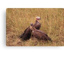 the waiting vultures Canvas Print