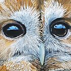 Tawny owl portrait by Robbiegraham